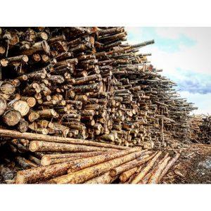 Kitsap Firewood Yard 3